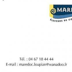Maredoc